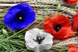 coquelicots en bleu, blanc, rouge - 3577349