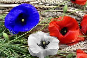 coquelicots en bleu, blanc, rouge