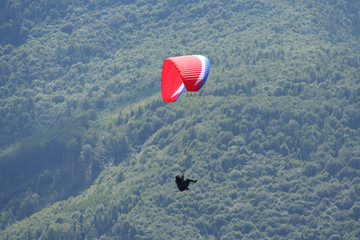 Single glider against wooded valley