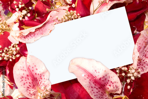 a note card in a pile of petals