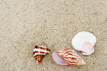 Three colorful seashells on sand.