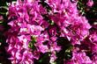canvas print picture - huebsche Blüten