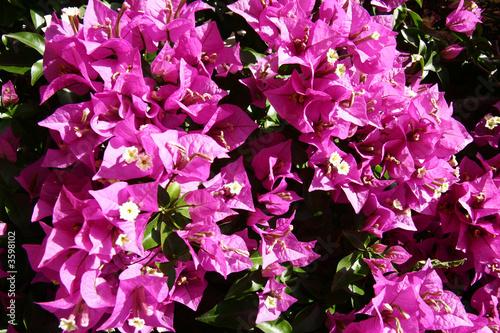 canvas print picture huebsche Blüten