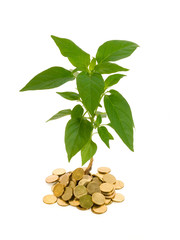 Plant rising from a pile of golden coins - finances