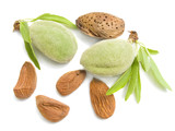 Young almond with nucleus on a white background isolated poster