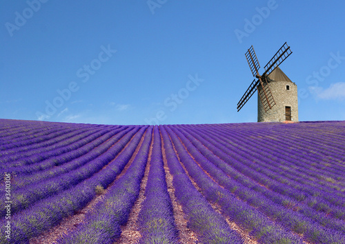Moulin et champs de lavande