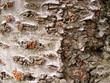 roleta: tree texture background