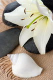 madonna lily spa stones and sea shell on cord poster