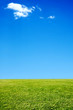clean background of grass and sky with a little cloud