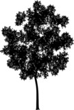 Generic tree poster