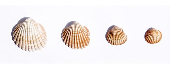 conchas en fila