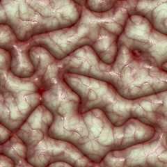 Brain surface and texture