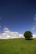 à l'ombre d'un arbre