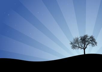 Cielo stellato - il grande albero