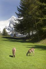 Deer in front of Mont Blanc range - portrait orientation
