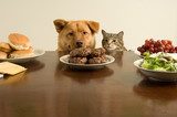 Dog and cat ready for the feast poster