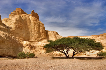 oasis Ein-Bokek at coast of the Dead Sea