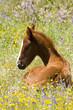 Leinwanddruck Bild cheval 10