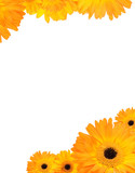 Gerbera flower frame with copyspace poster