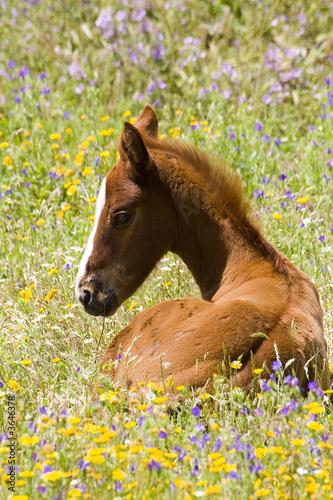 Leinwandbild Motiv cheval 10