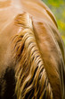 Leinwanddruck Bild cheval 13