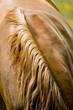 Leinwanddruck Bild cheval 17