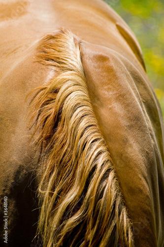 Leinwandbild Motiv cheval 13