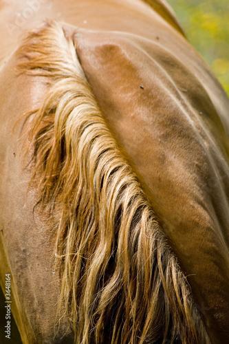 Leinwandbild Motiv cheval 17