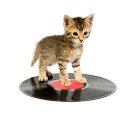 Kitten standing on a record