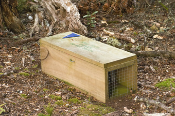 A stoat trap laid in Boundary Stream Reserve