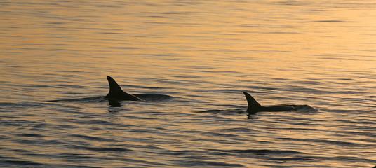 Delfine Australien_07_1462