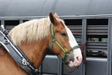 Draft Horse and trailer poster