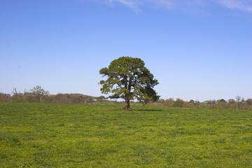 Ozark countryside