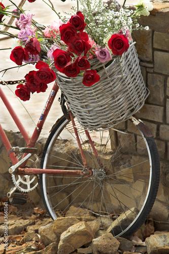 Fototapeta Basket of roses on a bicycle
