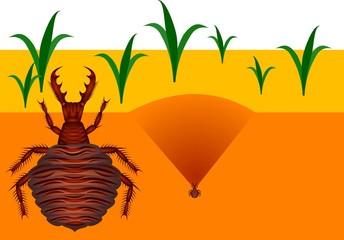 Ant-lion