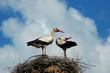 Storks_004