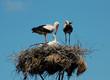 Storks_003