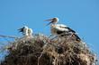 Storks_005