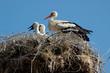 Storks_006