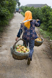 A farmer in China carrying baskets filled with fresh peaches poster