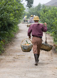 A farmer in rural China carrying freshly picked peaches poster