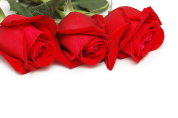 Three roses isolated on the white background