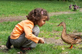 Little girl feeding the ducks