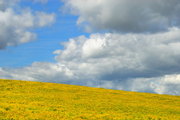 Sky and yellow field