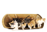 Kitties Jumping out of a Bowl poster