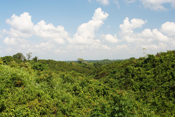 Rainforest in Myanmar
