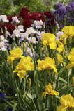 Vibrant Spring Garden poster