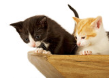 Two little kitties poster