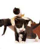 Meow Meow Kitty poster