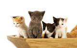 Bowl of Kitties poster